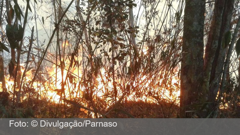 Bombeiros combatem fogo próximo ao Parque da Serra dos Órgãos no Rio