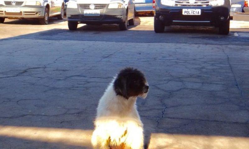 Cachorro espera em pátio de delegacia onde dono está preso no Paraná